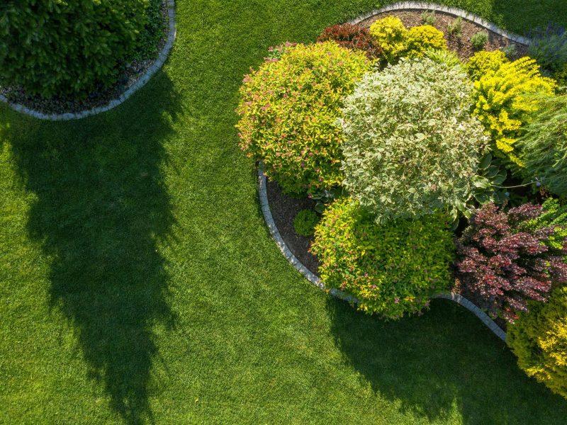 shrubs beds borders