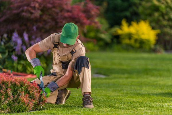 worker-trimming-bushes-in-residential-garden-J25MPER